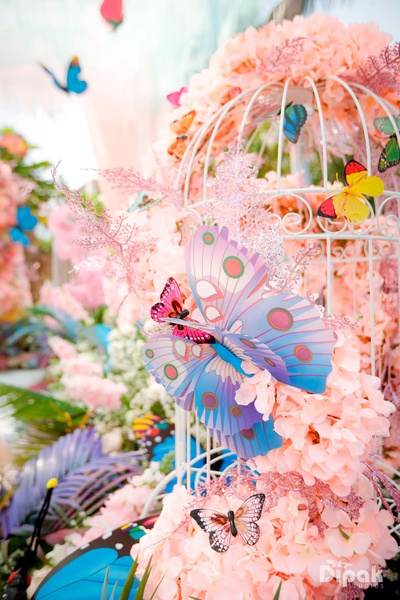 A burst of colours and pop- flowers, captivating butterflies and a cage!