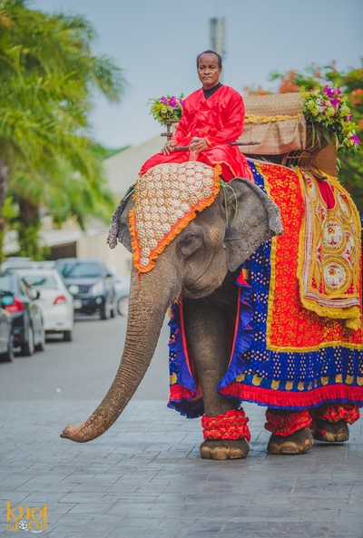 Elephant decorated and readied to escort the groom to the wedding mandap