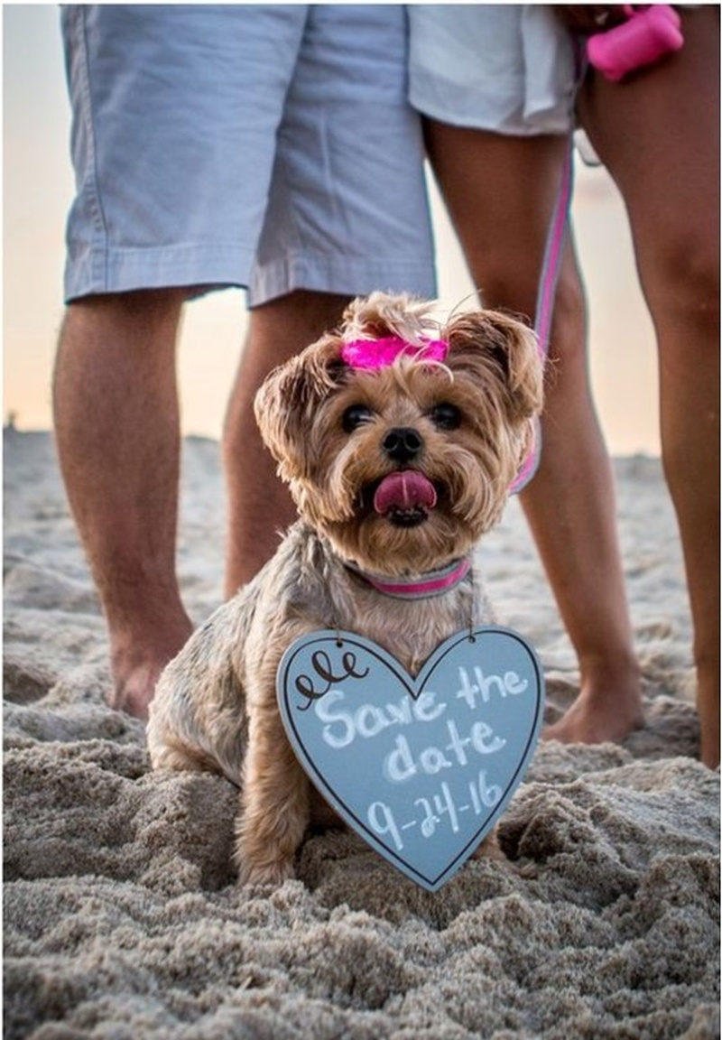 20+ Adorable Save-The-Date Photo Ideas With The Cutest Doggies! #SaveTheDateWithPets