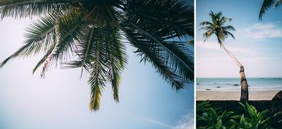 Beach side Parhina Resort, Goa for the couple's beach themed wedding ceremony