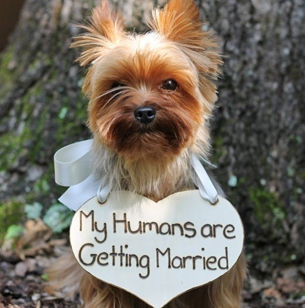 Have pets? Let them break the news!