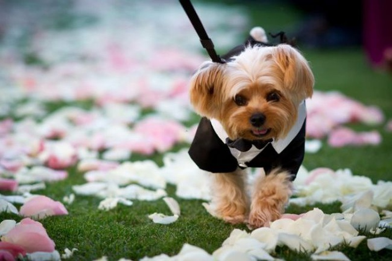 How to involve pets in your wedding celebrations?